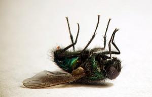 мухи-3