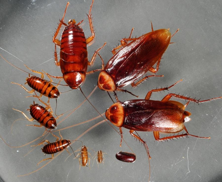 Как избавить свое жилье от тараканов