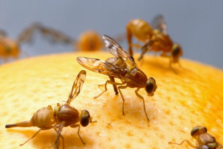 Как быстро и эффективно избавиться от мух?