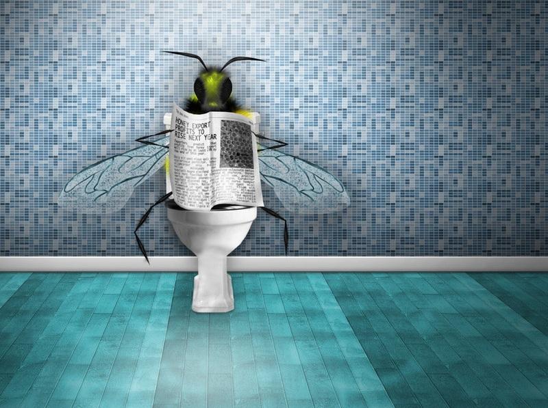 Boryba-s-tualetnoy-mukhoy