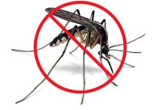 комары-3