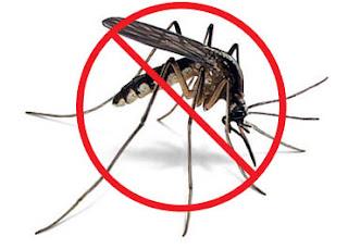 Простые и эффективные методы борьбы с комарами