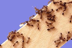 муравьи-2