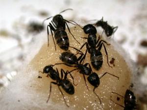 муравьи-3