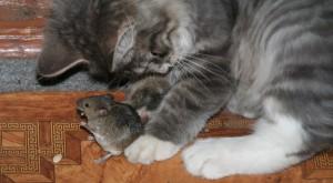 мышь-2
