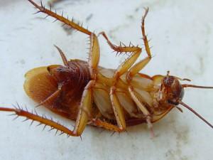 тараканы-2