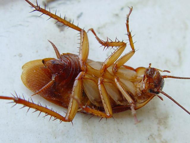 Выводим тараканов из квартиры раз и навсегда!