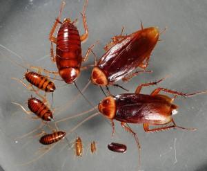 тараканы-3