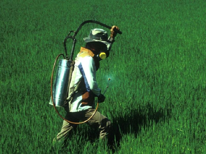 Человек опрыскивает лук химическими средствами
